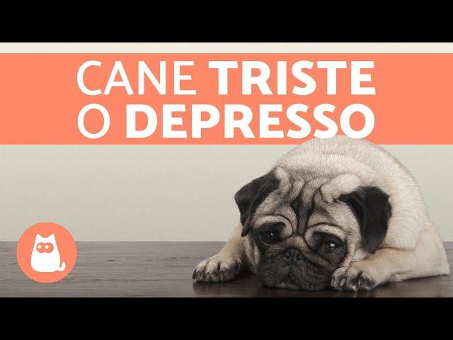 Cane triste o depresso - Sintomi e cosa fare