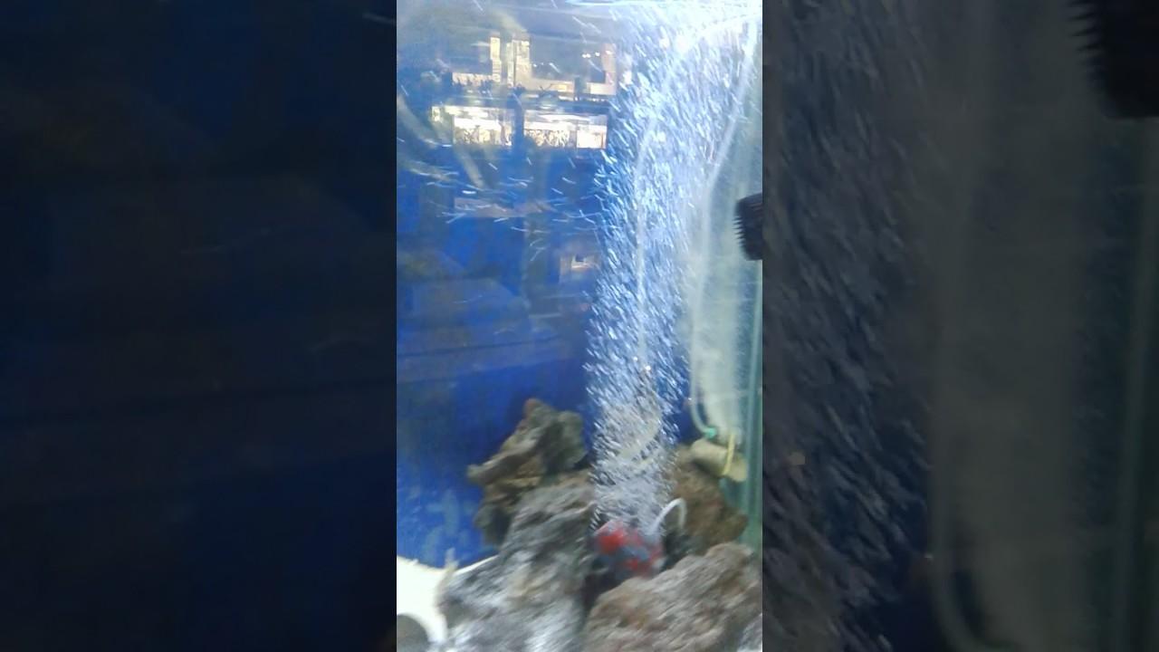 Largest Aquarium Fish Shop In Delhi Youtube