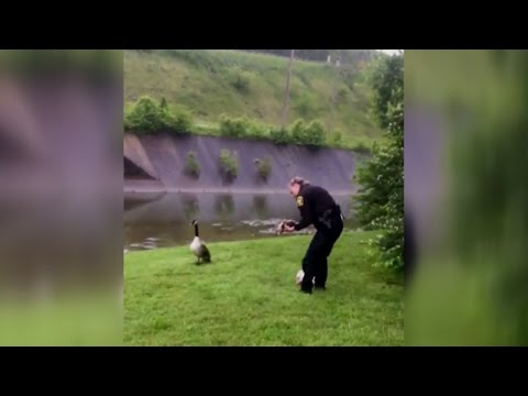 Mother Goose Asks Police Officer To Help Baby Tangled In Rope
