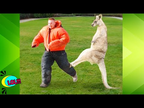 HAVING A BAD DAY! WATCH THIS ??Funny Animals Attack And Troll People
