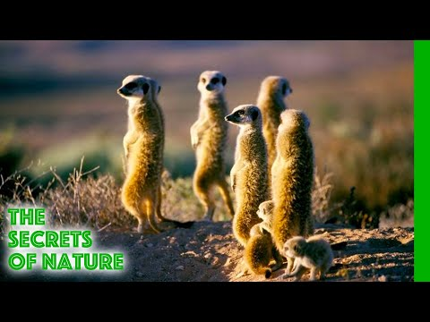 Namaqualand - Africa's Desert Garden - The Secrets of Nature