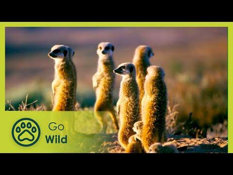 Namaqualand - Africa's
