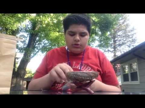 How to use a abalone shell for smudging