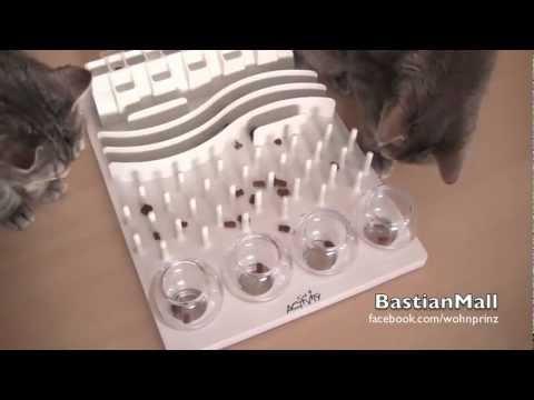 Ein MUSS für Katzenbesitzer! HAMMER!!!