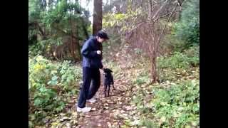 Stay Tag   Train Your Dog To Not Run Away Using Clicker Training And Play