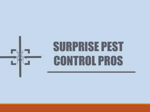 Surprise Pest Control Pros-Ant Control Service in Surprise AZ