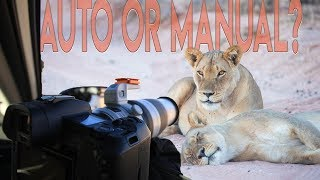 Wildlife Photography: Manual vs. Auto Focus