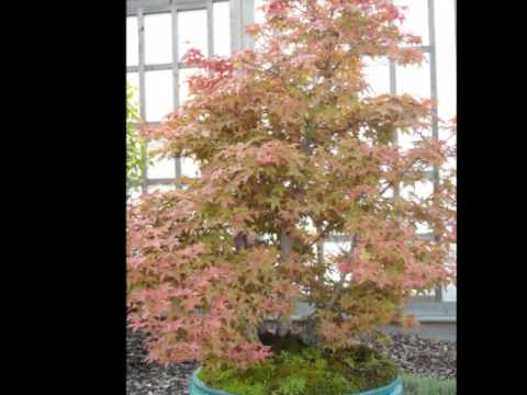 Bonsai pics showing some great outdoor examples