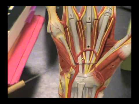 hand model - YouTube