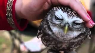 Лучшая подборка приколов Массаж головы птицы приколы с животными няшечки сова