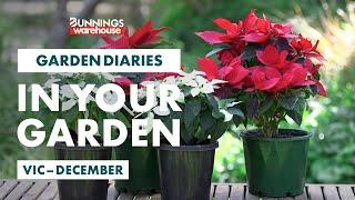 Gardening in December | Victoria | Bunnings Garden Diary