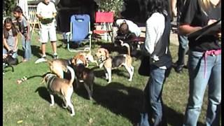 Spanish Beagle Rescue 1 Year Anniversary Clip 8
