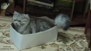 Кот чихает, задорно, громко и много))