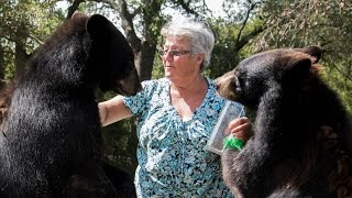 The Granny Who Lives With Two Bears And A Tiger