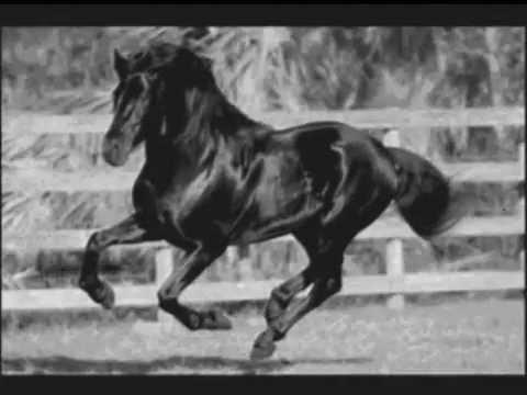The Azteca Horse