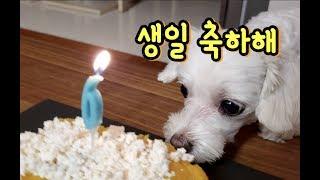 강아지가 축하해주는 강아지 생일파티