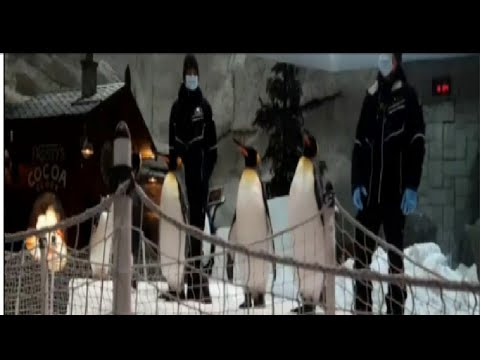 Trip to Ski dubai and encounter with Penguins. അങ്ങനെ ഞങ്ങൾ പെൻഗ്വിനുമായി സെൽഫി എടുത്തു