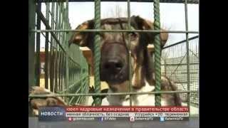 видео Лариса Козырева: Законы о защите животных хороши, но нужно больше контроля за их исполнением