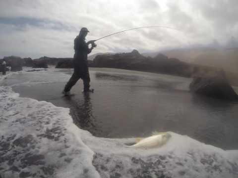 Pesca corvina en iquique Chile