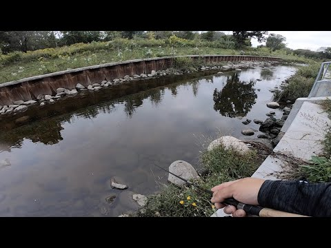 Fishing For Creek Monsters In Spillway