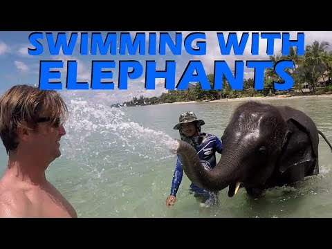 Swimming with Elephants & Big Announcements! - Sailing Doodl