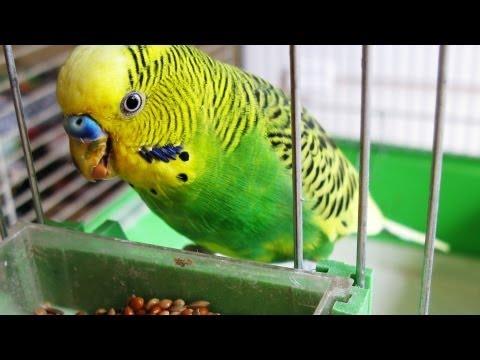 How to Quiet a Bird   Pet Bird