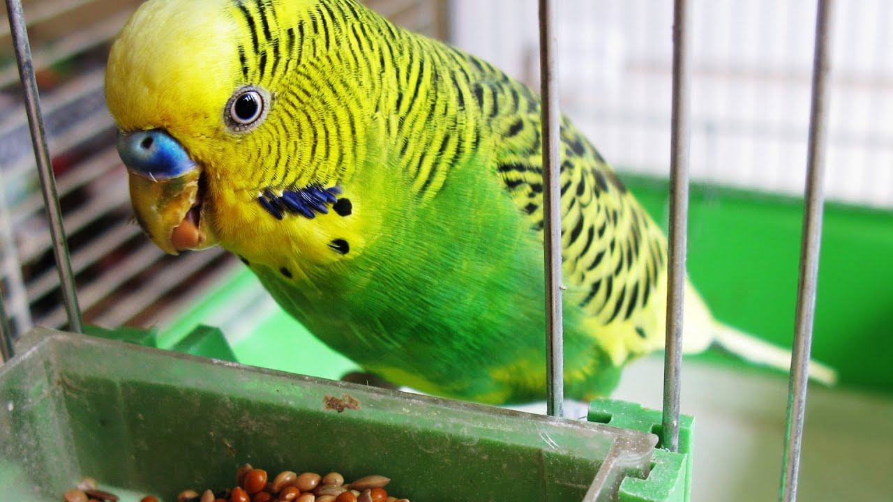 Image result for bird as a pet