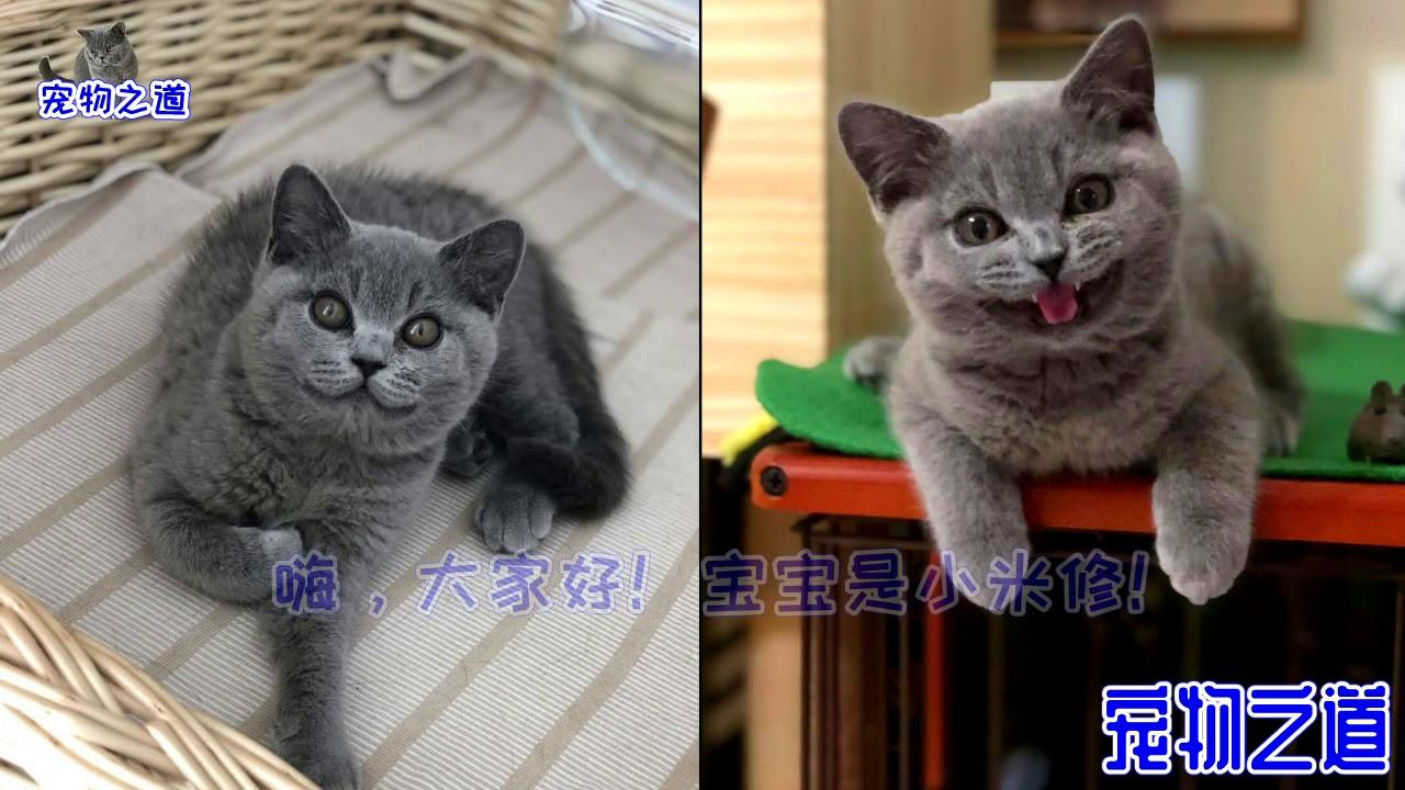 小貓到新家與原住貓相見後,場面叫原主人吃驚,難道這就是緣分?
