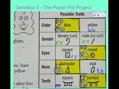 Essay on genetics