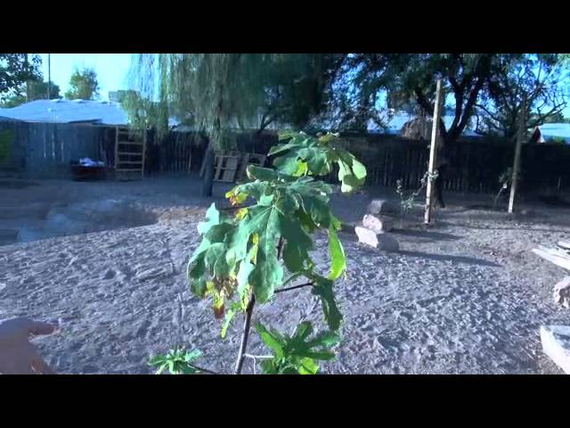 The Vegan Athlete's Backyard Farm - New Garden and New Trees