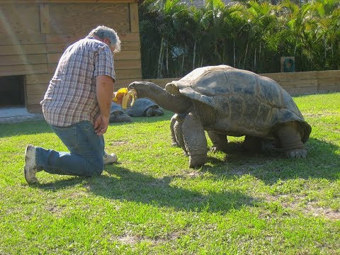 255 years old Aldabra tortoise try to Escape from the zoo (E