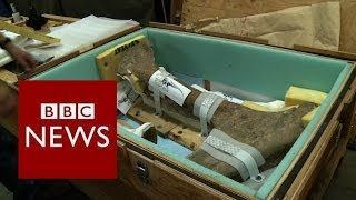 How to get T-Rex remains ready for a 2,000 mile road trip? BBC News