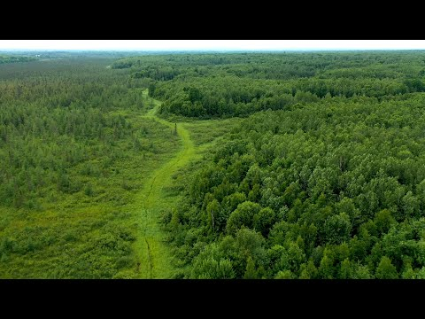 Up North Big Woods Property With Good Hunting For Sale (600 Acres In Rusk County, Wisconsin)