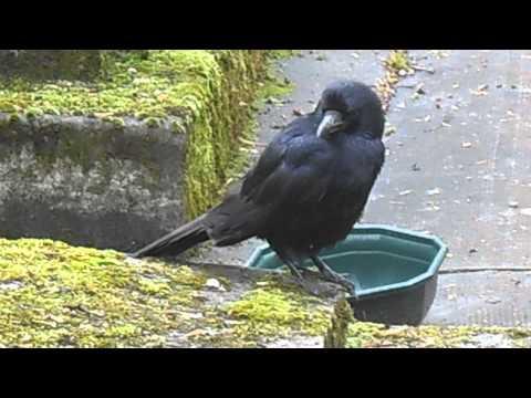 Père Lachaise Cemetery - Mr Crow