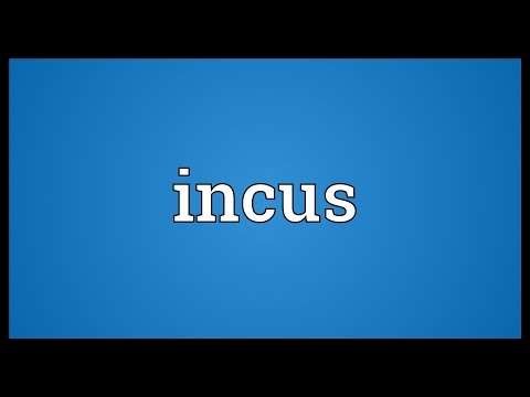 Incus Meaning