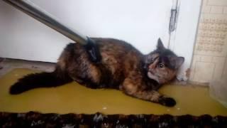 Кошка боится пылесоса