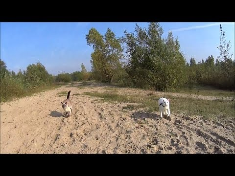 Siamese cats run & have fun in desert-like area off-leash (+ their funny reaction to a big ship)