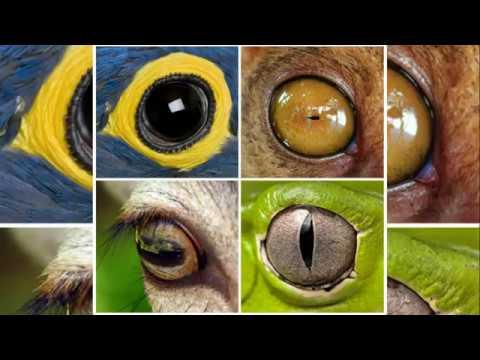 Animal Eyes Quiz: Can You Identify an Animal By Its Eye?