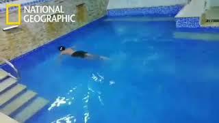 انه ليس تمساحا عاديا  - national geographic