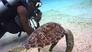 Tauchen und Schnorcheln mit Schildkröten rund um Dimakya Island, Apo Reef und Sangat Island