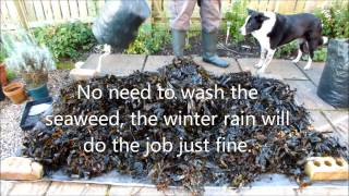 Garden Shredder, Winter Composting, Seaweed and Leaves with a Royal ending