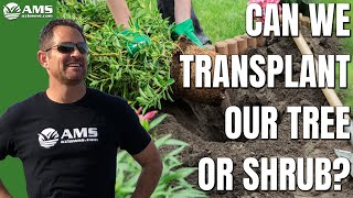 Can We Transplant Our Tree Or Shrub?