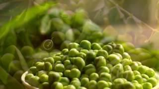 ЗЕЛЕНЫЙ ГОРОШЕК ПОЛЬЗА И ВРЕД | зеленый горошек консервированный польза,  как есть зеленый горошек