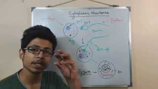 Cytoplasmic inheritance