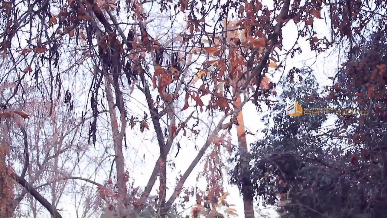 Arboles de hoja caduca que no contribuyen a descontaminar for Arboles de hoja caduca