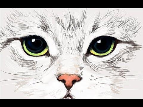 [그리다] 고양이 얼굴 그림그리기