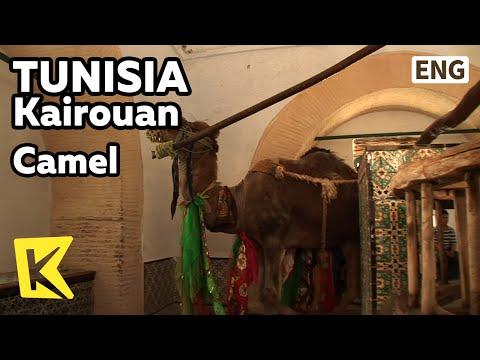 【K】Tunisia Travel-Kairouan[튀니지 여행-카이로우안]우물물 깃는 낙타/Camel/Well/Water/Wish
