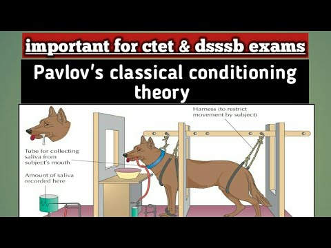 Preparedness In Pavlovian Conditioning | Thesis papers for sale