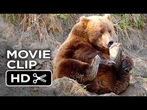 Bears Movie CLIP - Stuffed Bears (2014) - Disneynature Documentary HD
