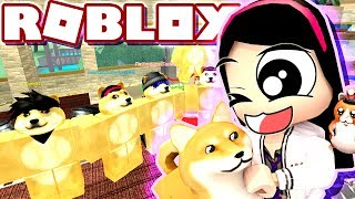 All the WONDERS That is of DOGE - Roblox Roleplay Doge Research Tycoon - DOLLASTIC PLAYS!